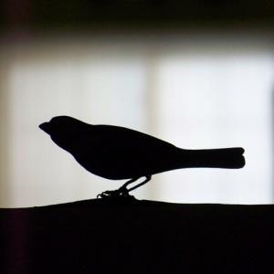 bird-silhouette-470